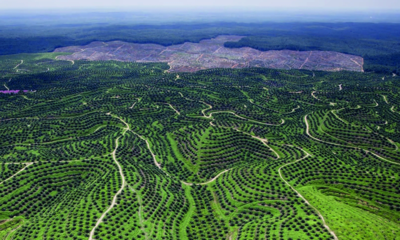 le-role-de-lunion-europeenne-dans-la-lutte-contre-la-deforestation-importee