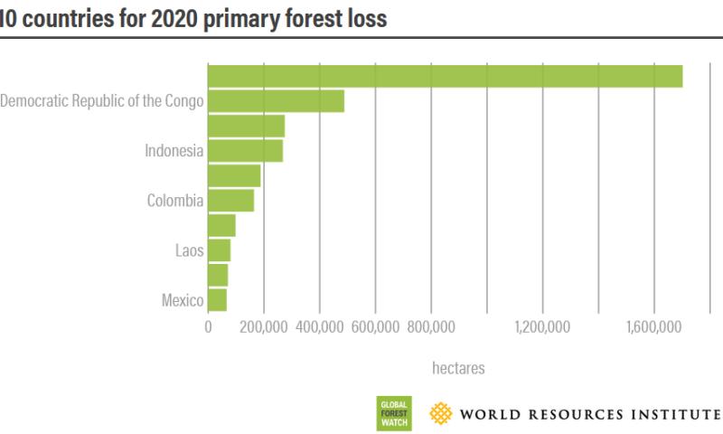 forest-pulse-les-dernieres-nouvelles-sur-les-forets-du-monde